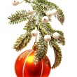 Christmas fir branch — Stock Photo