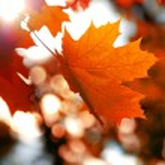 Maple leaf — Stock Photo #35490111