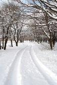 Winter landscape — Stock Photo