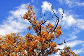 Autumn landscape — Stok fotoğraf