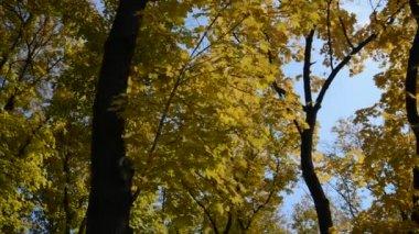 Autumn landscape — Stockvideo