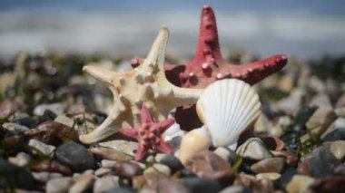 Starfish and shells on the sand — Stock Video
