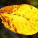 Yellow leaf — Stock Photo