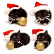 Collection little kitten with Santa Claus hat — Stock Photo
