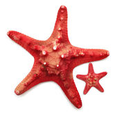Red sea star — Stock Photo