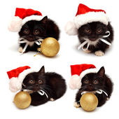 Collection little kitten with Santa Claus hat  — Foto Stock