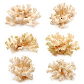 Collection of coral — Stock Photo