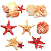 Collection of sea stars, shells and coral  — Stock Photo