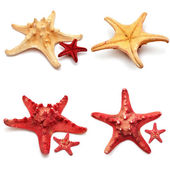 Sea stars collection  — Stock Photo