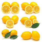 Collection of lemon  — Stock Photo