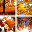 Collage of photos of autumn — Stock Photo #47764359