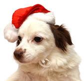 Christmas dog with Santa Claus — Stock Photo