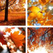 Collage of photos of autumn  — Stock Photo