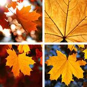 Beautiful collage of autumn  — Stock Photo