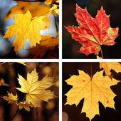 Beautiful collage  — Stock Photo