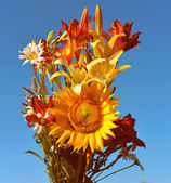 Bouquet of sunflowers, lilies and daisies — Stock Photo