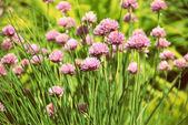 Wild grass  — Stock Photo