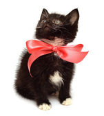 Little kitten with bow — Stock Photo