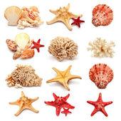 Sea stars and shells — Stock Photo