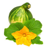 Squash with leaves — Stock Photo