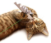 Small kitten with paper bow — Stockfoto
