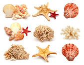 Sea stars, shells and coral — Stock Photo