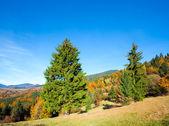 Jesień las górski — Zdjęcie stockowe