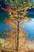 Höstens träd och synevir lake — Stockfoto
