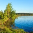 Summer rushy lake — Stock Photo #12547382