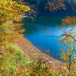 Royalty-Free Stock Photo: Autumn tree and Synevir lake
