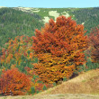 Autumn mountain forest — Stock Photo
