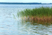 Summer rushy lake — Stock Photo