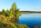 Latem jezioro trzcinowe zarośla — Zdjęcie stockowe