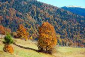 Höstens bergskog — Stockfoto