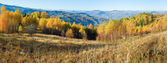 Autumn mountain forest panorama — Stock Photo