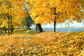 Autumn maple trees in park — Stock Photo