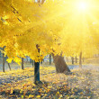 Autumn maple trees in park — Stock Photo #13068304