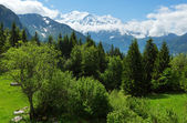 Mont Blanc mountain massif (view from Plaine Joux outskirts) — Photo