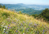 Summer mountain view with flowers — Stock Photo