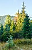 Paisagem de montanha outono enevoadas de manhã — Foto Stock