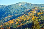 Outono floresta de montanha — Foto Stock