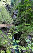Family and Liechtensteinklamm gorge (Austria) — Stock Photo