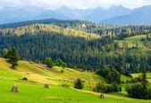 Vista de país de la montaña de verano — Foto de Stock