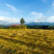 Summer mountain evening country view with mown field — Stock Photo