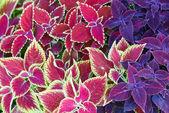 Flower landscaping — Stock Photo