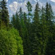 High Tatras (Slovakia) spring view. - Stock Photo