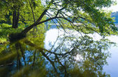 Summer lake view and tree reflection — Stock Photo
