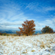 Stock Photo: First winter snow and autumn colorful foliage on mountain
