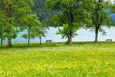 Paisagem de verão achensee (áustria). — Fotografia Stock