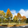 Stock Photo: First winter snow and autumn colorful trees near country road